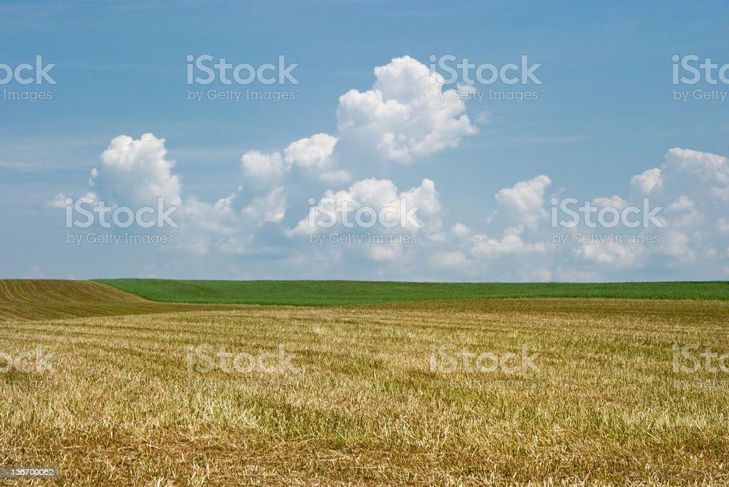 Hay Fields in Summer, Freshly Cut royalty-free stock photo
