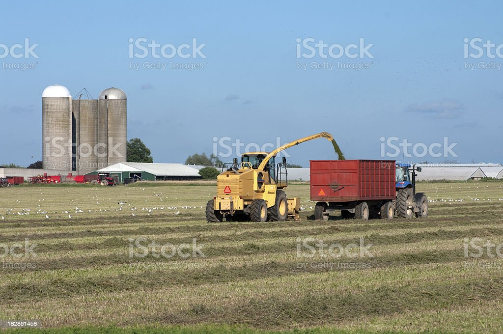 Hay for Silage royalty-free stock photo