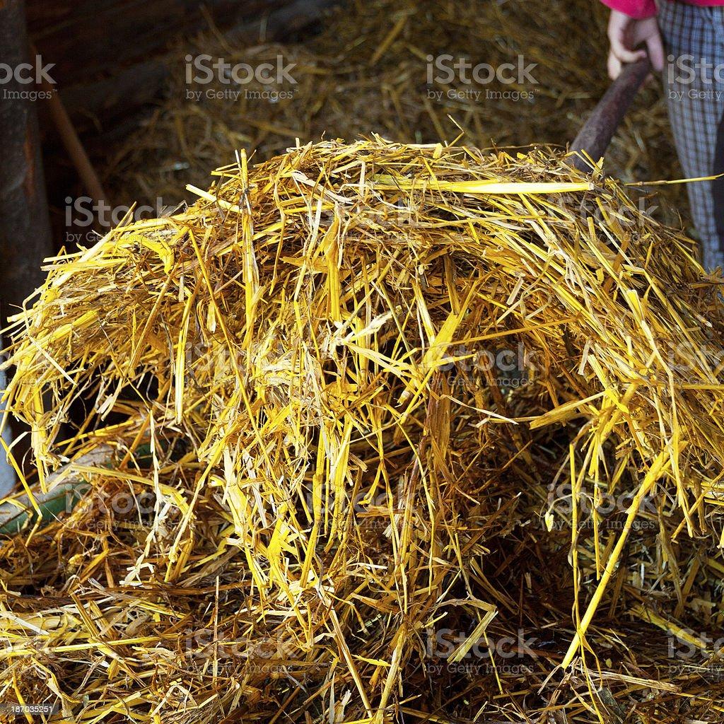 Hay fork stock photo