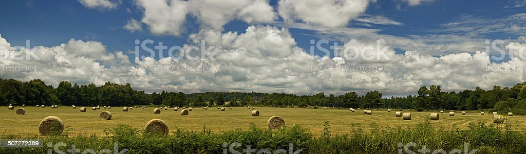 Hay in Field Panorama stock photo