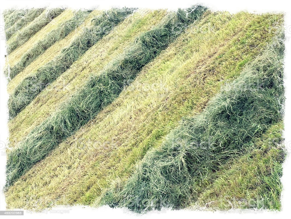 Hay in the Field Slovenia Europe royalty-free stock photo