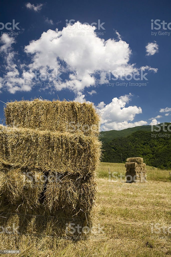 Hay in the Summer royalty-free stock photo
