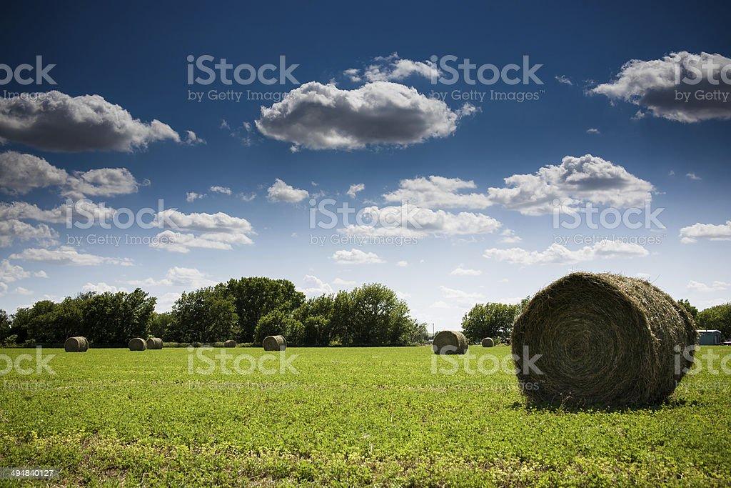 Hay in the Sun stock photo