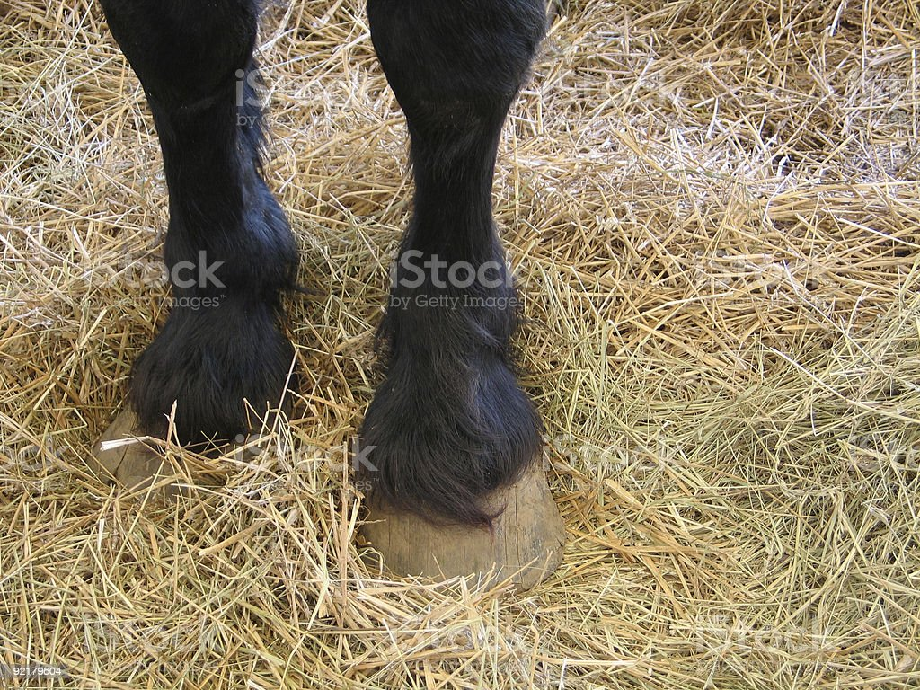 Hay is for Horses royalty-free stock photo