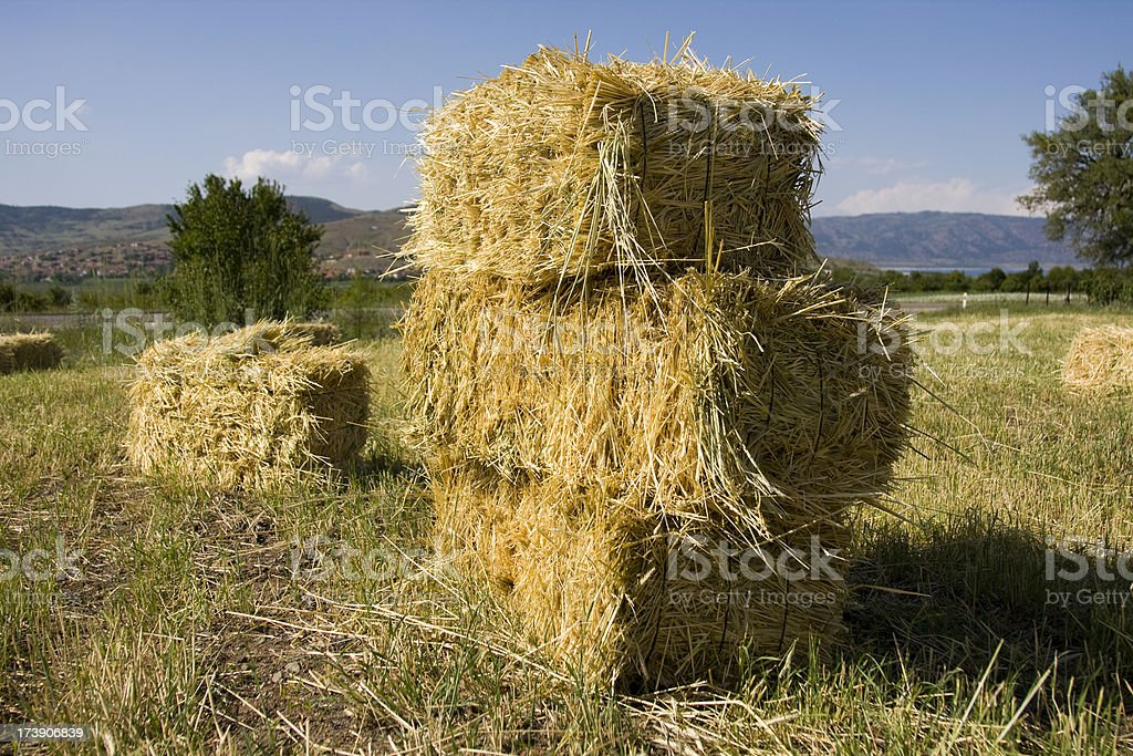 Hay on the field stock photo