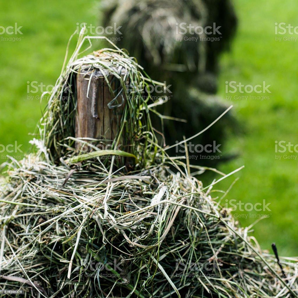 Hay poles stock photo