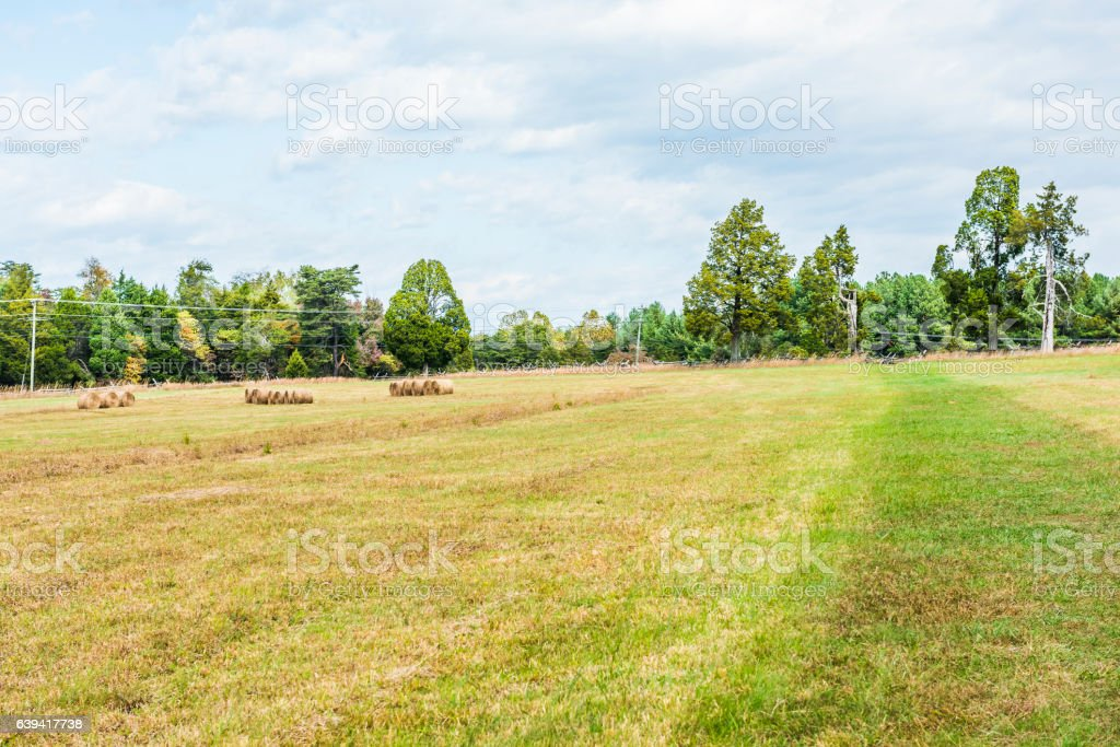 Hay roll bales on countryside field with power telephone lines stock photo
