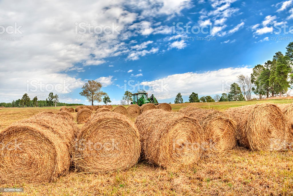 Hay roll bales with tractor on countryside field stock photo