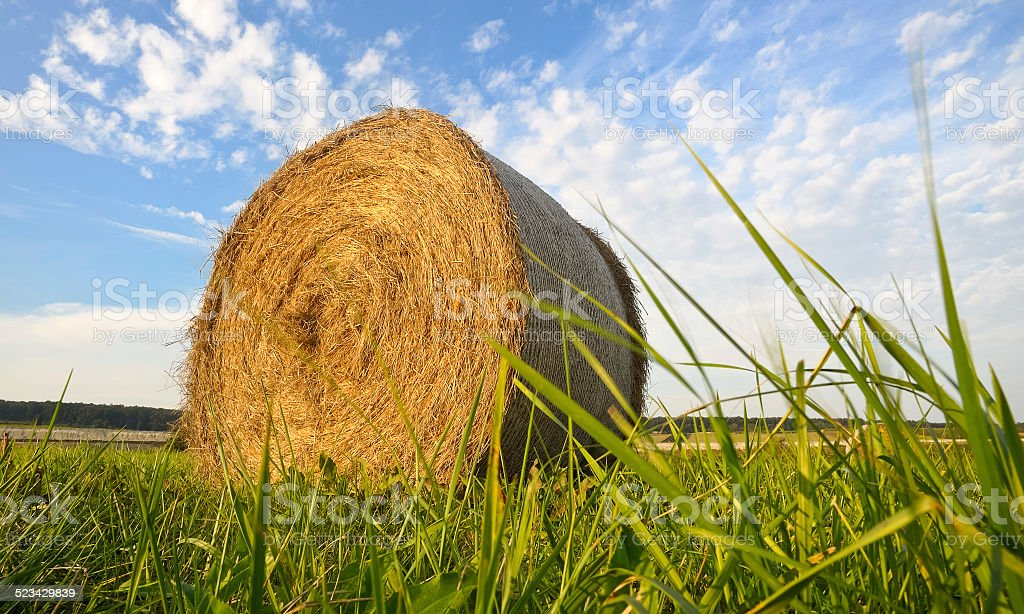 Hay roll in the grass stock photo