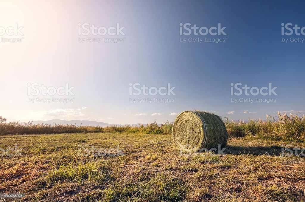 Hay roll on the meadow stock photo