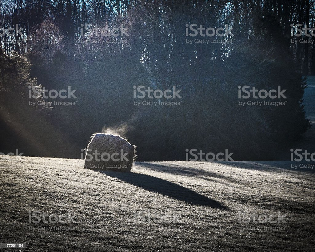 Hay Roll Warmed By The Morning Sun stock photo