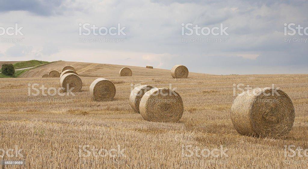 Heno rolles en feild foto de stock libre de derechos
