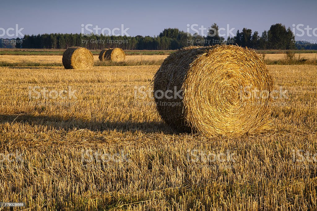 hay rolls on fallow field royalty-free stock photo