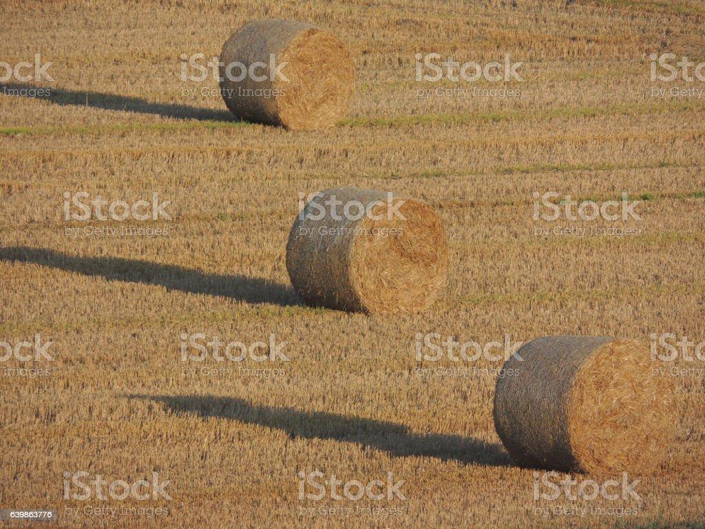 Hay Rolls stock photo