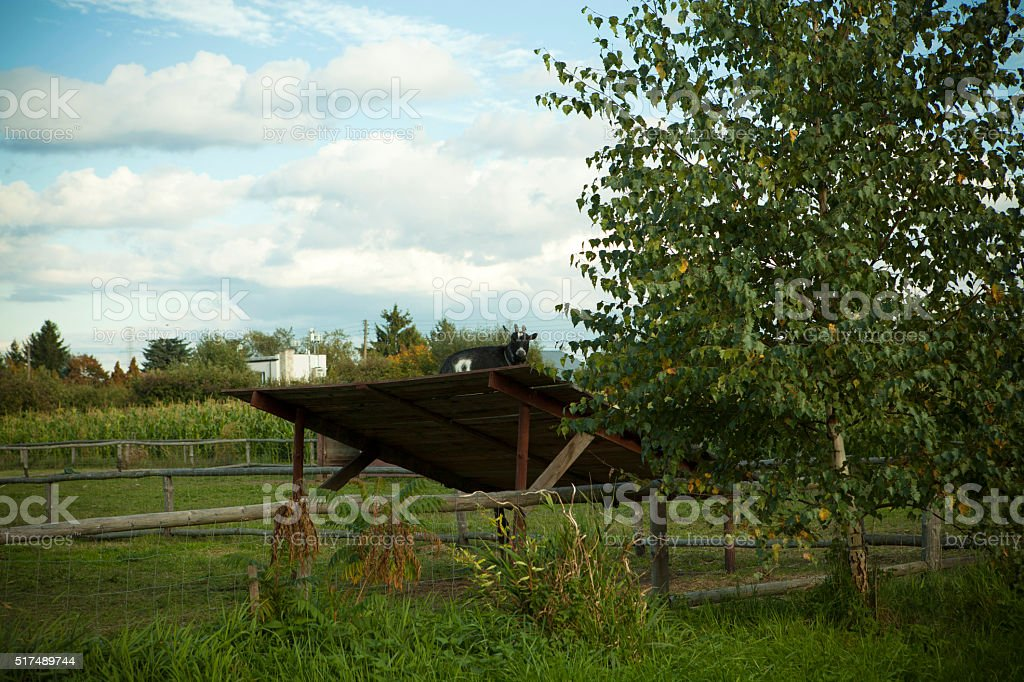Hay shed stock photo