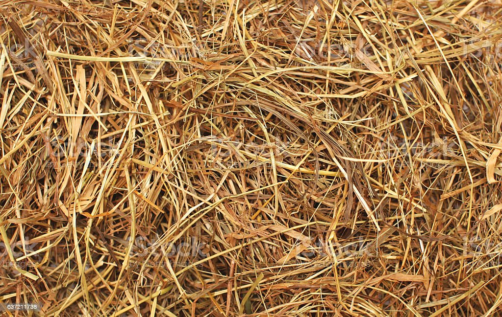 Hay texture closeup abstract background stock photo