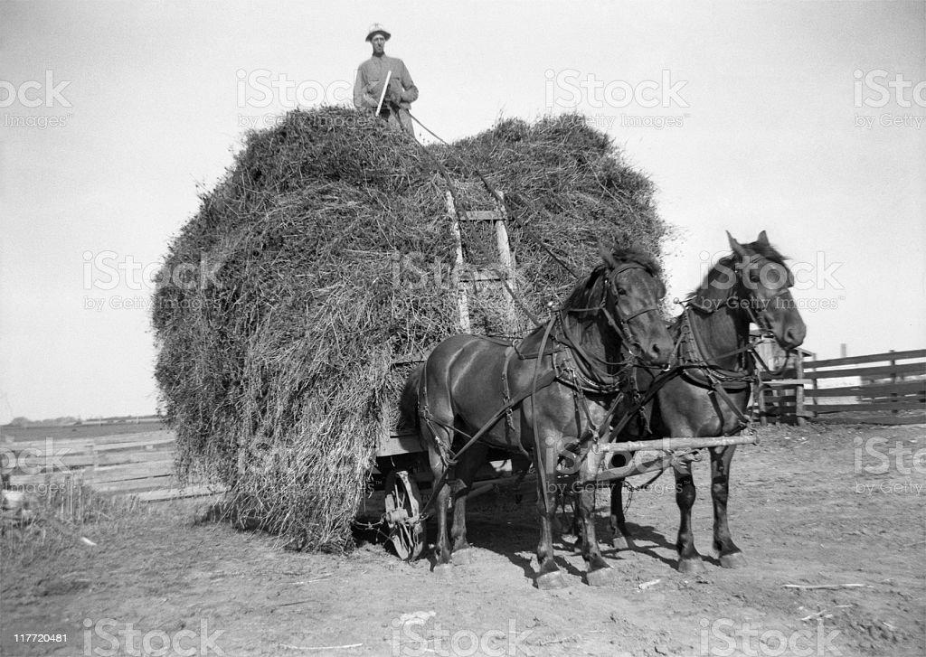 hay wagon and draft horses with farmer atop 1941, retro stock photo
