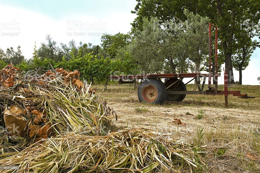 Hay wagon in the field stock photo