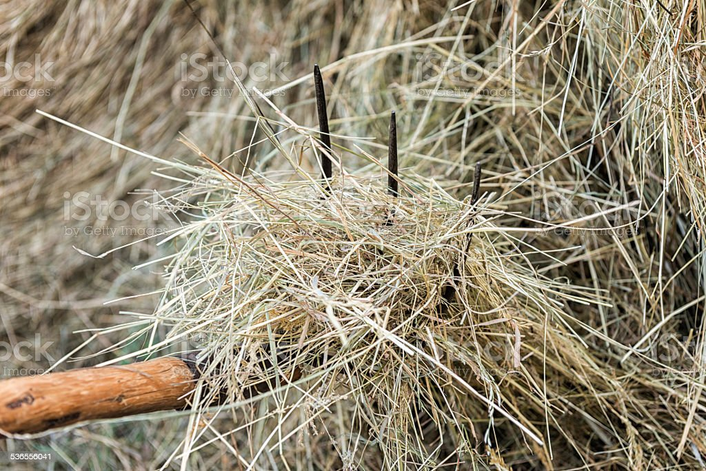 Hay with pitchfork stock photo