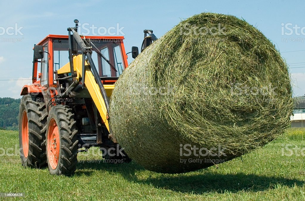 hay work royalty-free stock photo