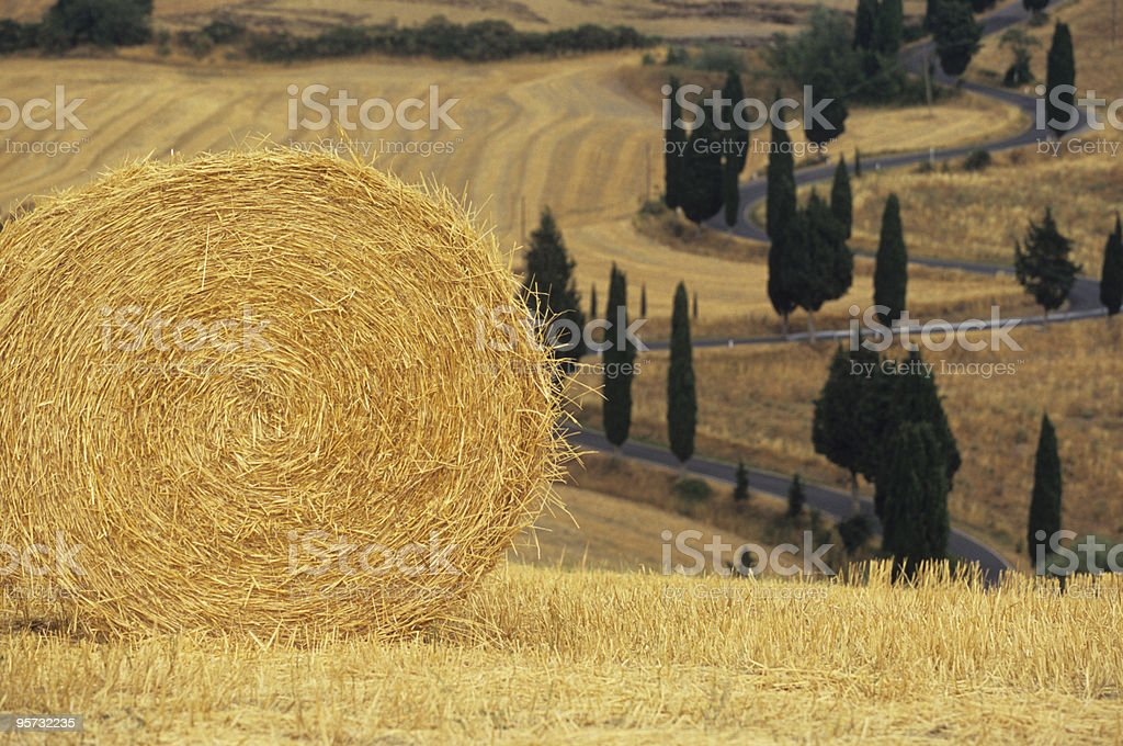 Haybale and tree lined road near San Quirico, Tuscany, Italy royalty-free stock photo
