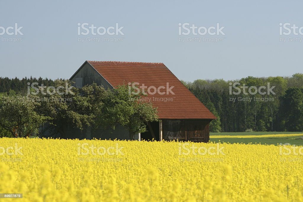 Haybale House in Spring stock photo