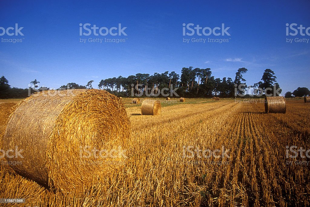 haybales in field royalty-free stock photo
