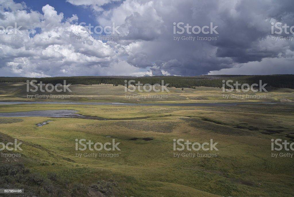 Hayden Valley Meadow stock photo