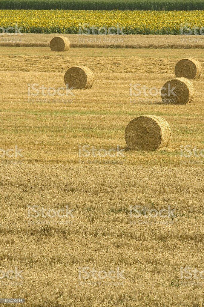 Hay-field  and sunflowers royalty-free stock photo