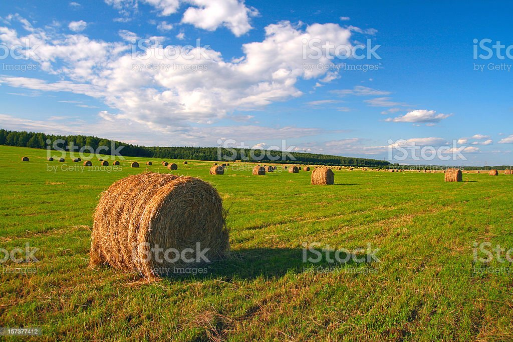 hayfield in summer day royalty-free stock photo
