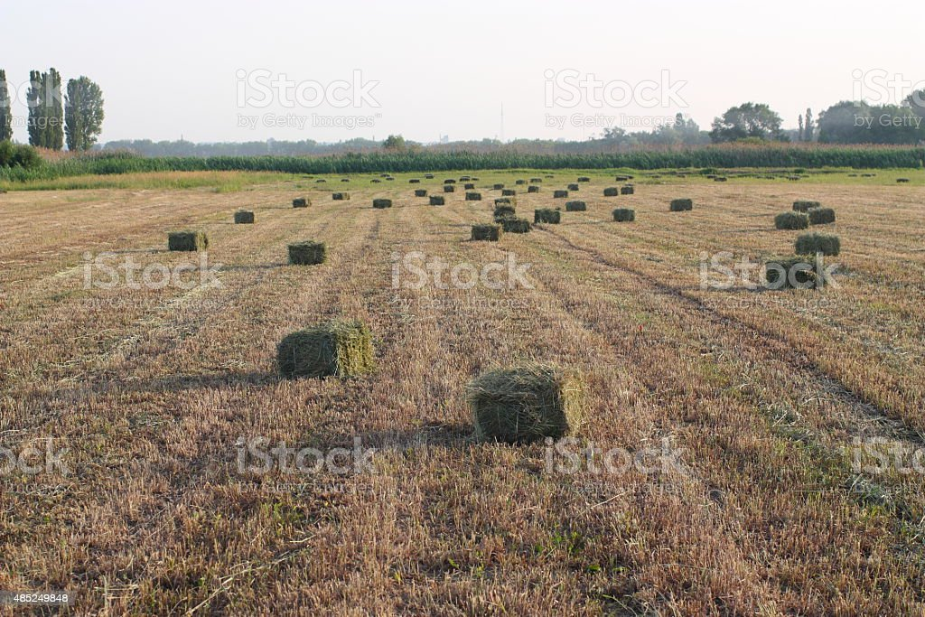 Hayfield royalty-free stock photo