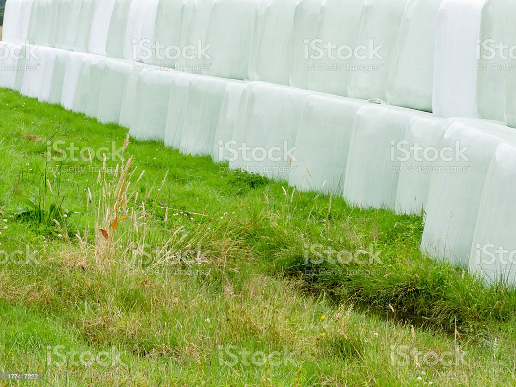 Haylage bales left outdoors for fermentation royalty-free stock photo