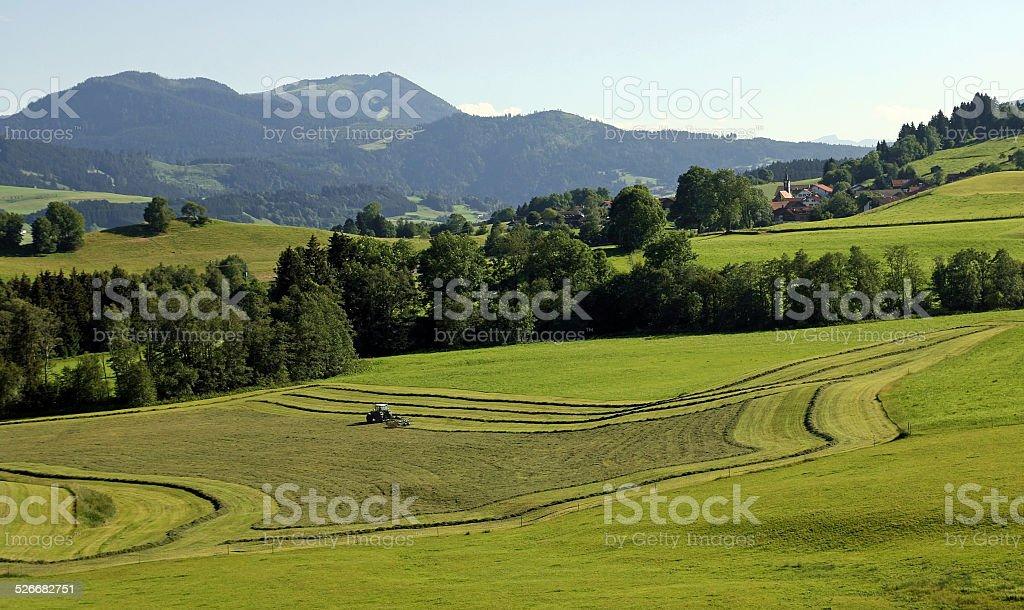 haymaking in Bavaria stock photo