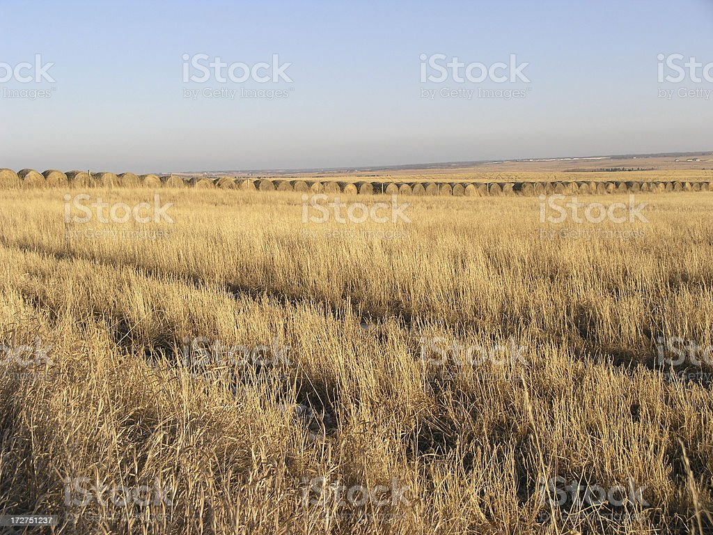 Hayrizon royalty-free stock photo
