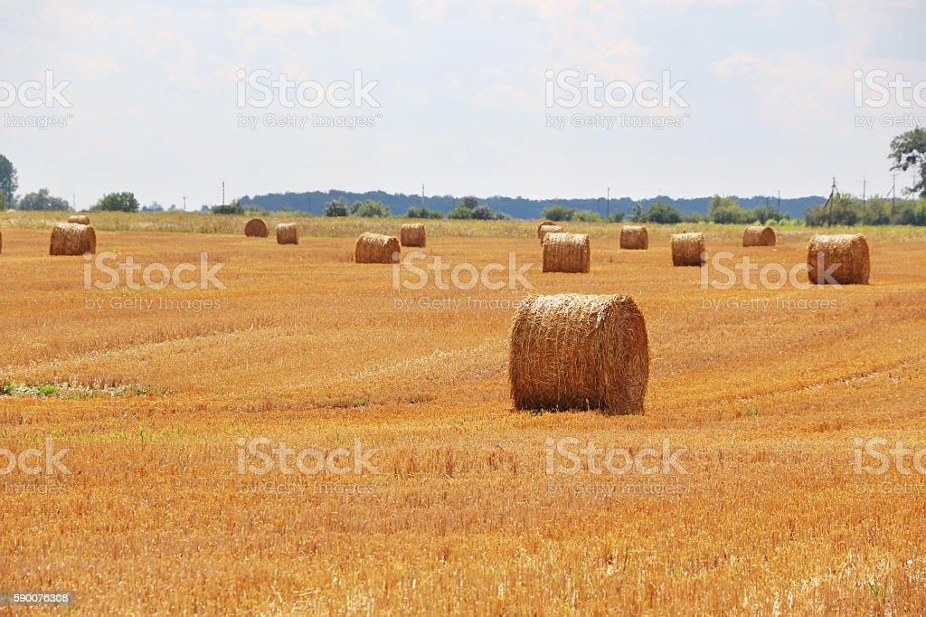 haystacks field sun stock photo
