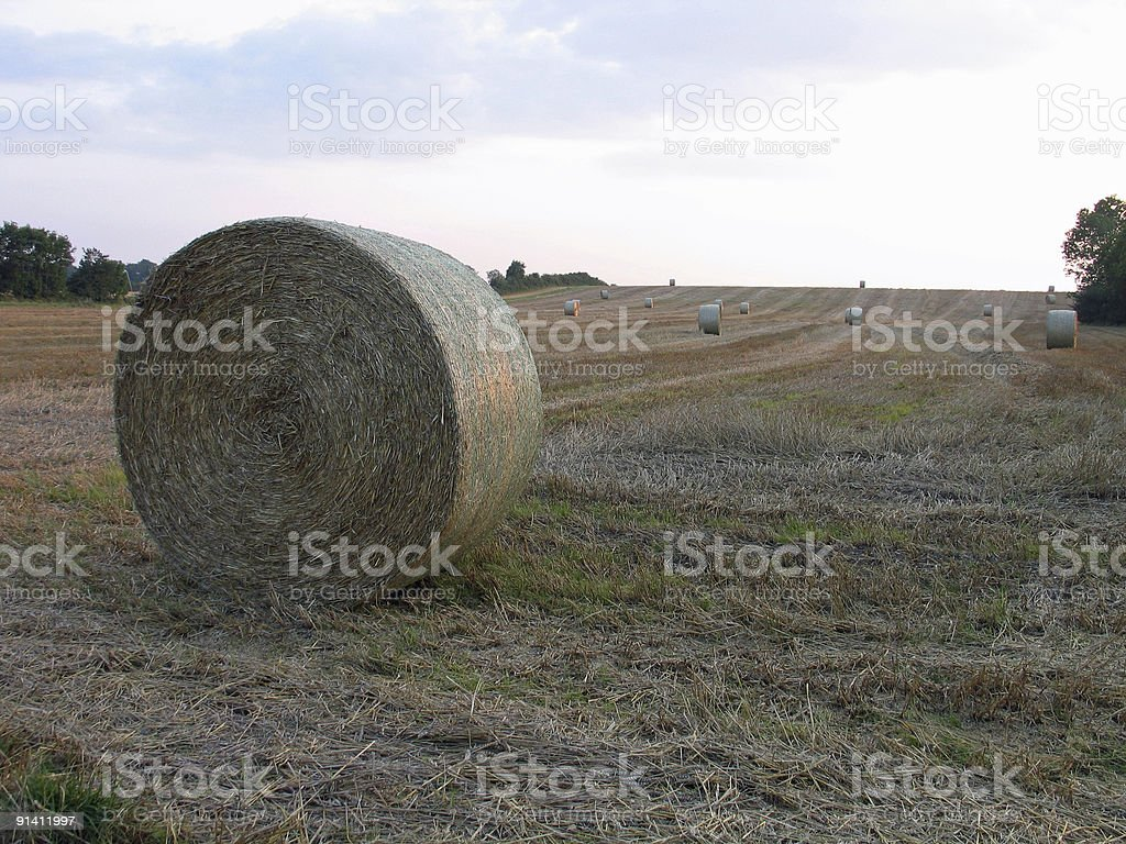 Haystacks in the field royalty-free stock photo
