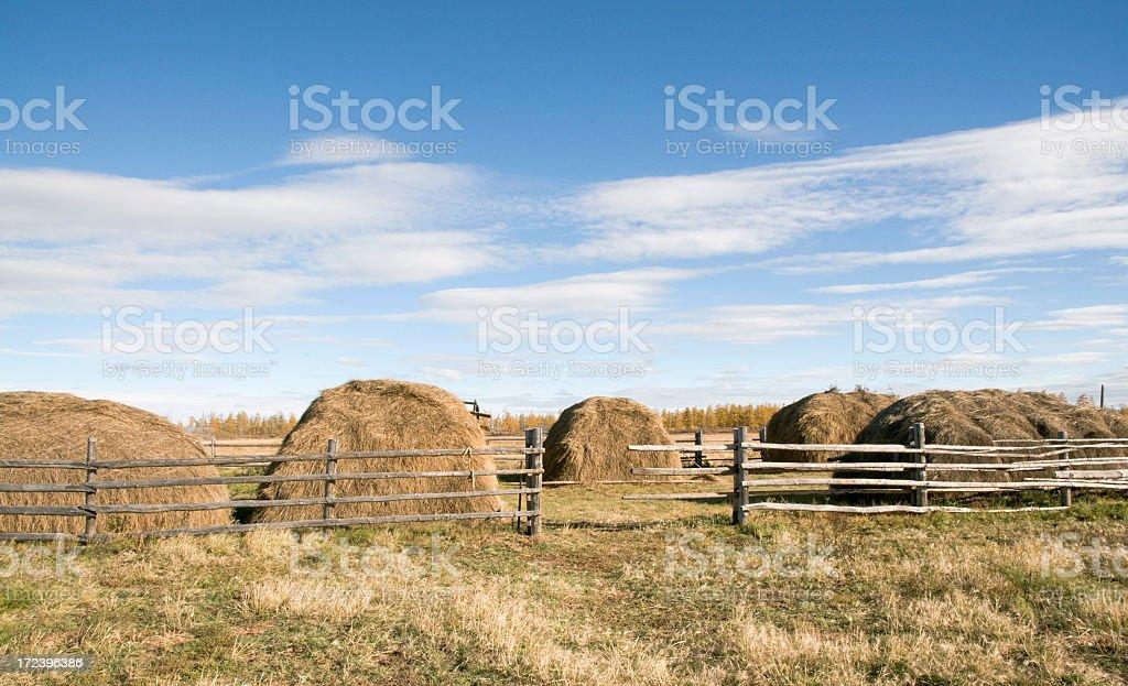 Haystacks royalty-free stock photo