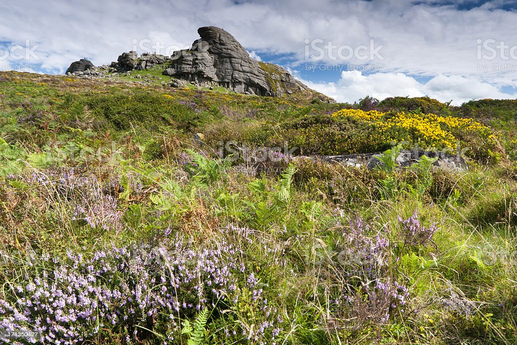 Haytor on Dartmoor with gorse and heather in bloom stock photo