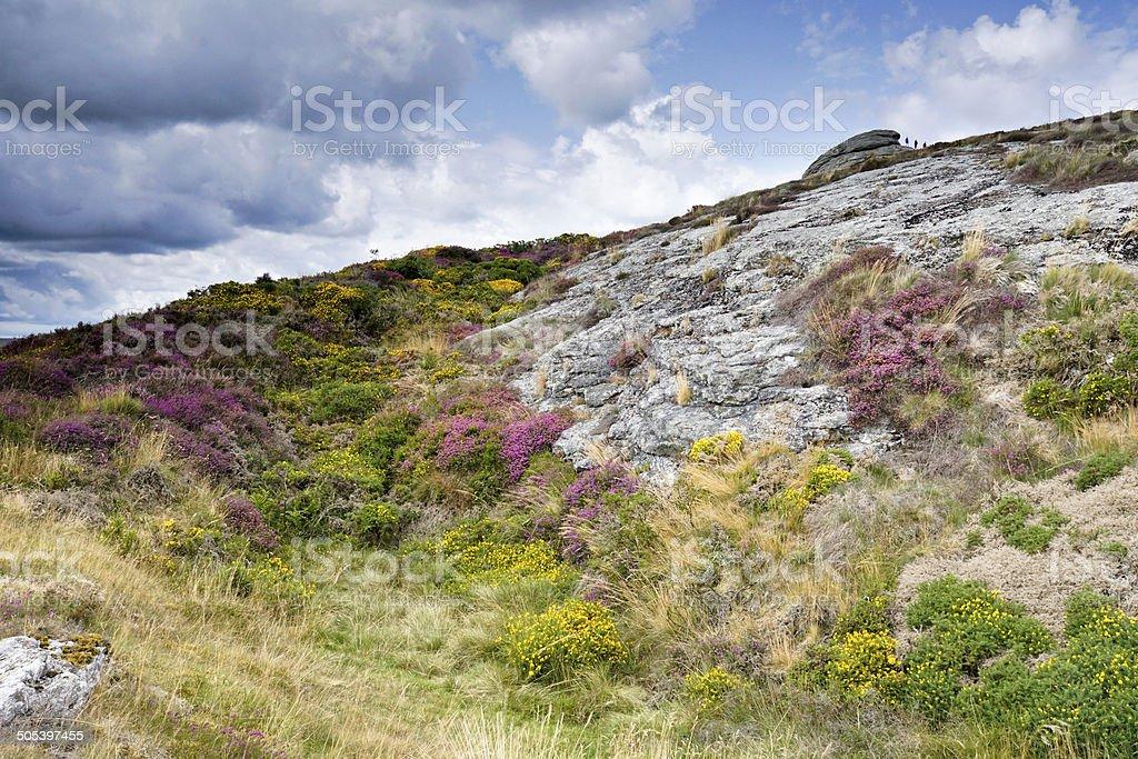 Haytor rocks Dartmoor with gorse and heather in flower stock photo