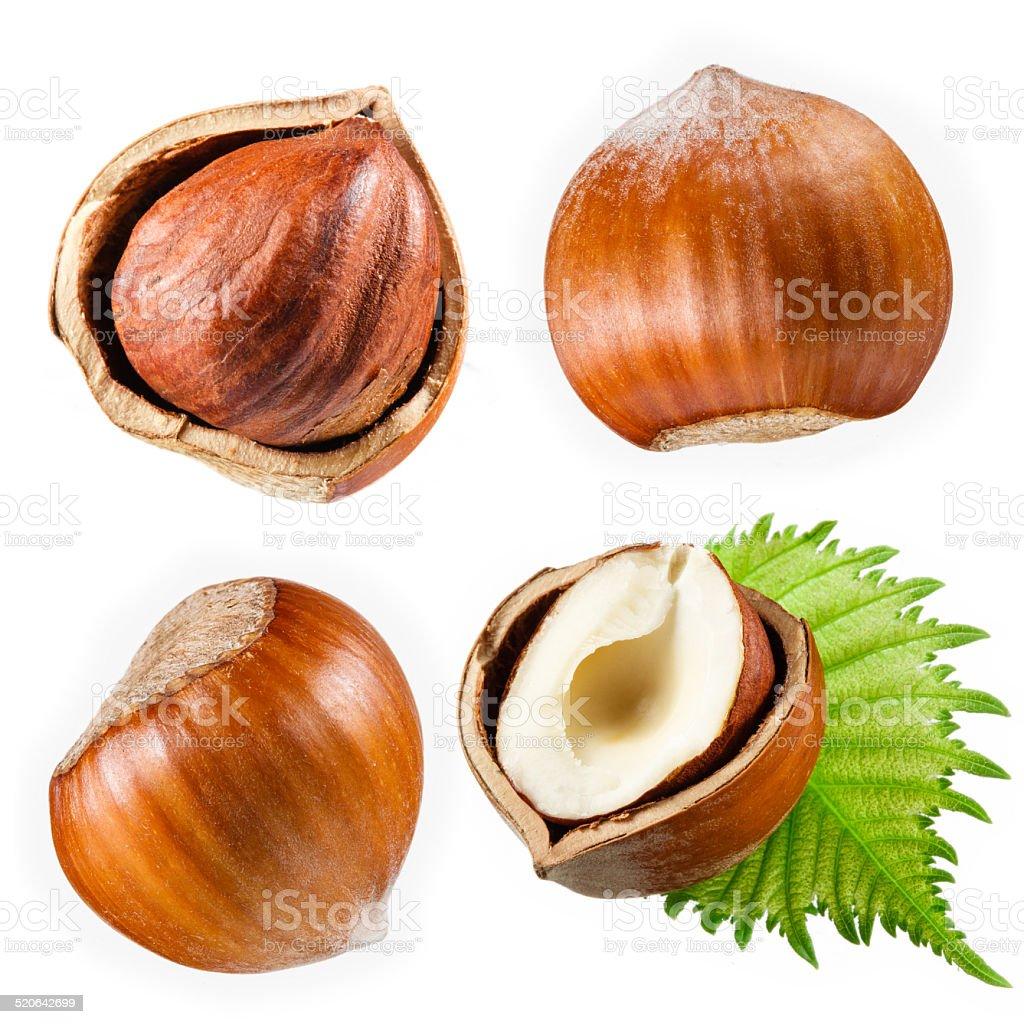 Hazelnut collection isolated on white stock photo