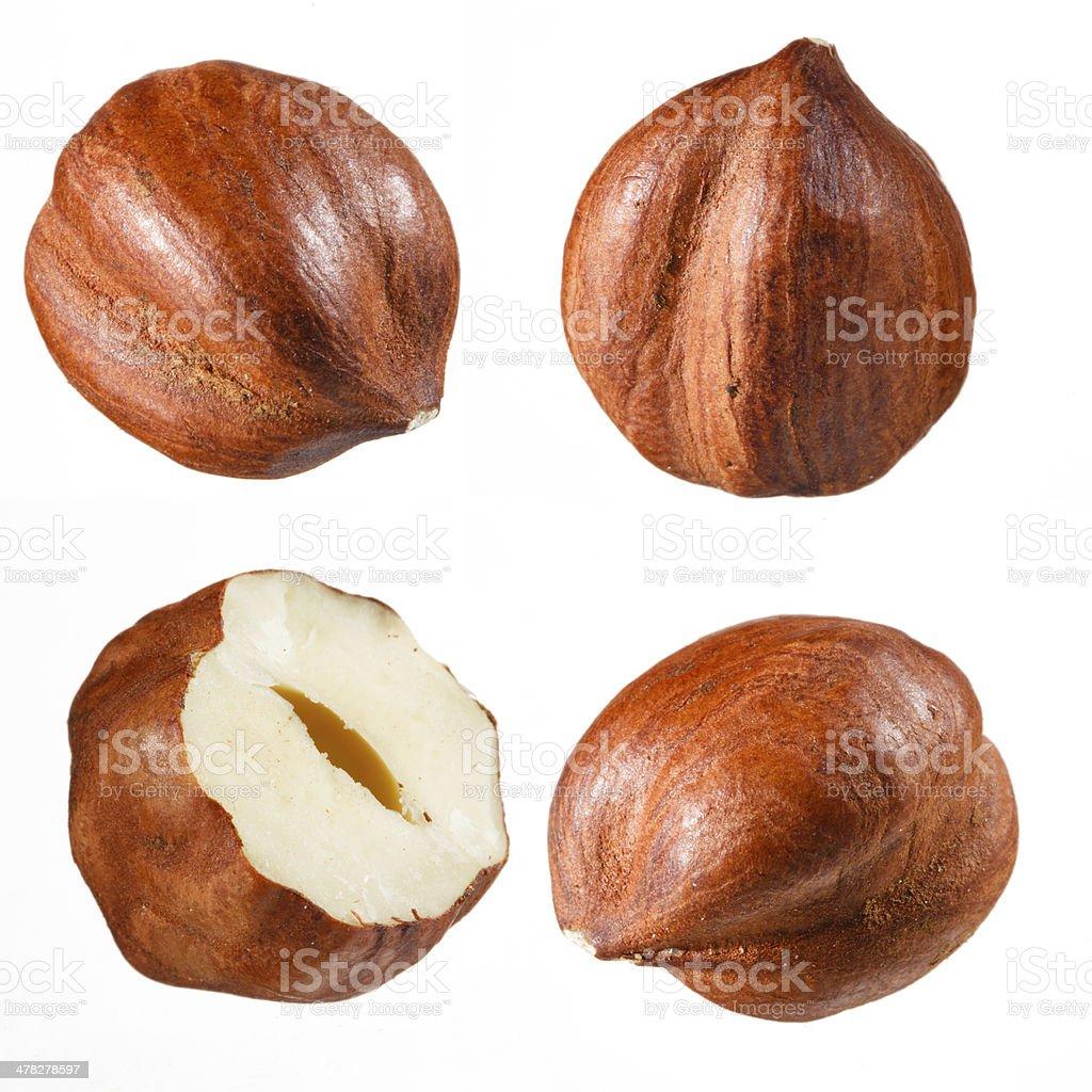 Hazelnut collection stock photo
