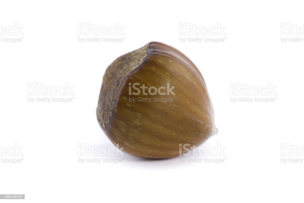 hazelnut isolated on white stock photo