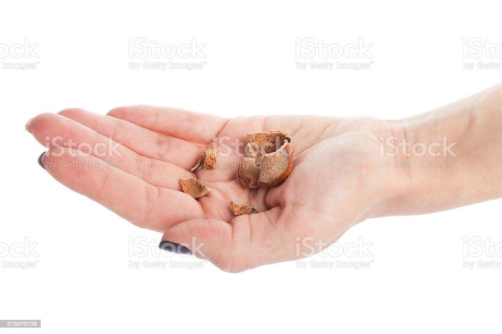 Hazelnut nutshell in hand isolated on white stock photo
