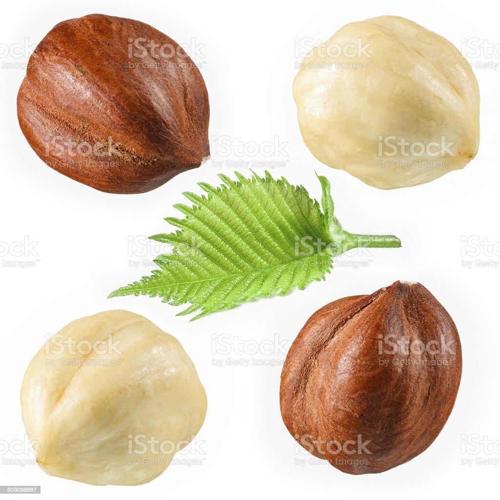 Hazelnut with leaf isolated on white stock photo