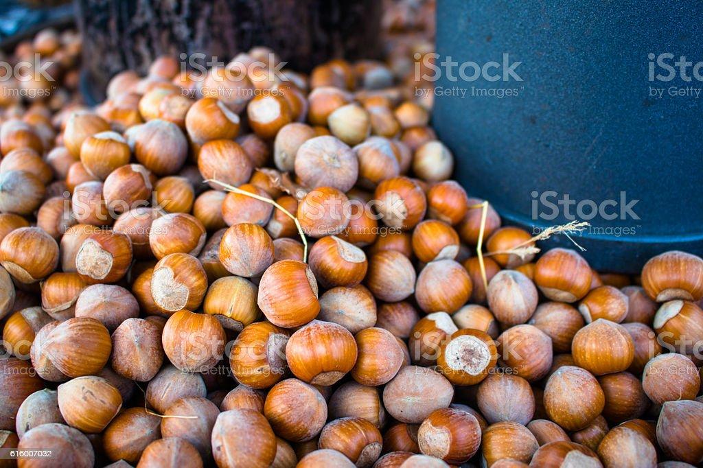 Hazelnuts and two buckets stock photo