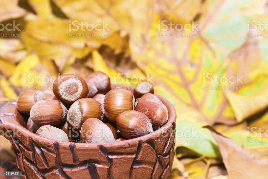 Hazelnuts in autumn royalty-free stock photo