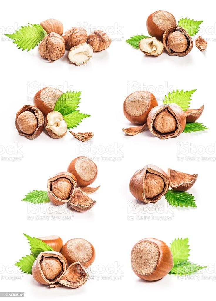 Hazelnuts isolated stock photo