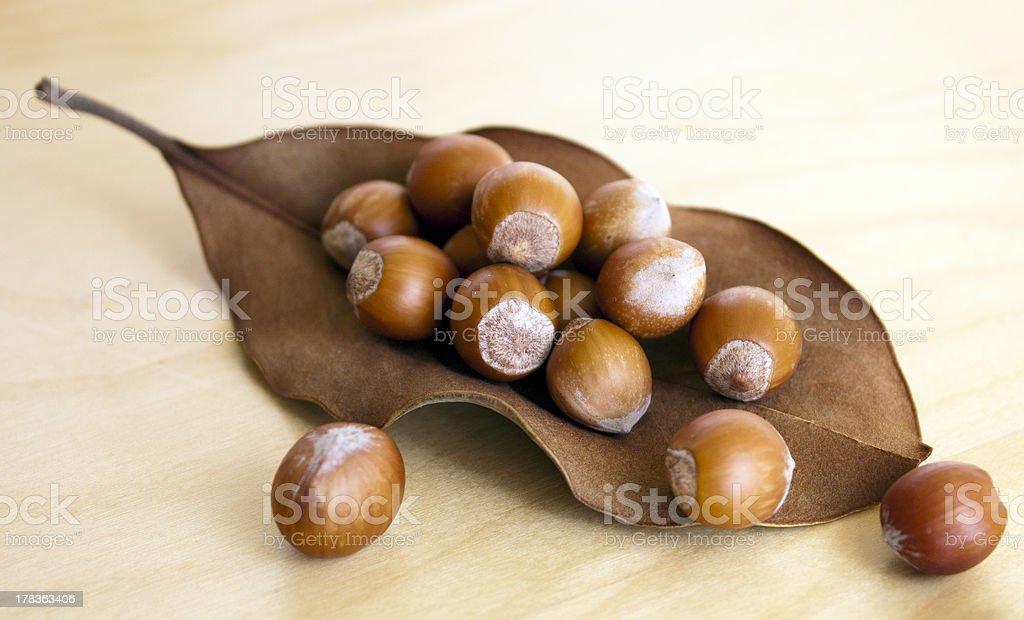 Hazelnuts on a dry leaf royalty-free stock photo