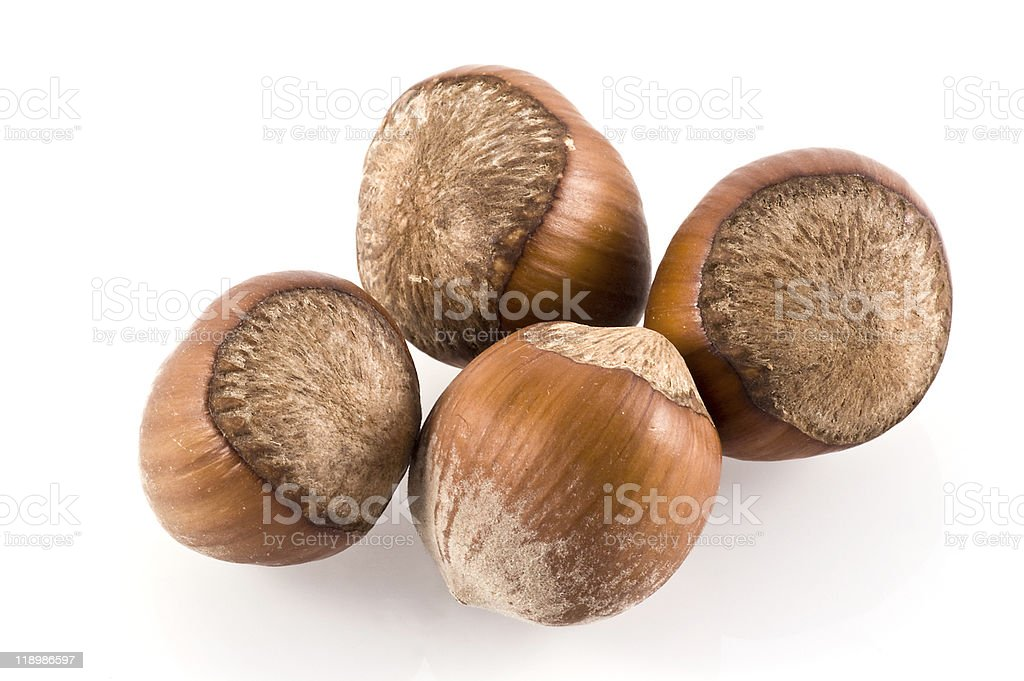 Hazelnuts. stock photo
