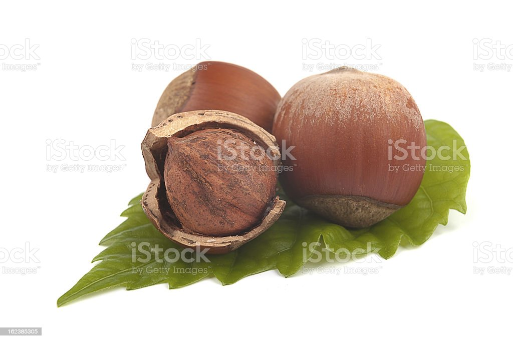 Hazelnuts royalty-free stock photo